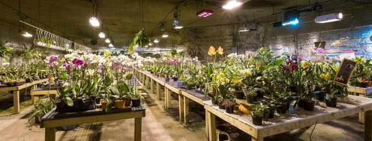 Birds-botanicals-orchid-growing-facility-kansas-city-1006.jpg